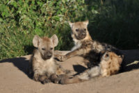 Plumbago Guesthouse Kruger National Park