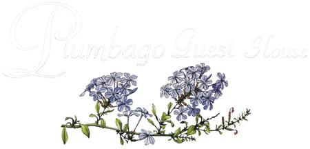 Plumbago Guesthouse Logo